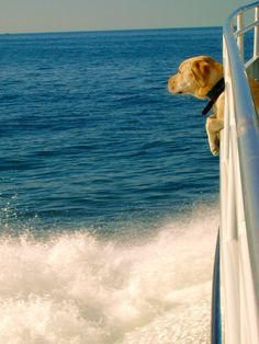 #dogs #sailing