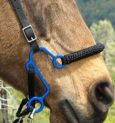 S Hackamore for bit-less riding