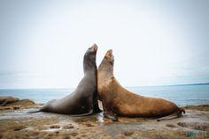 """Playdate"" by nicholas_elwell | From Afar: Wildlife Photo Contest Winners Blog - ViewBug.com"