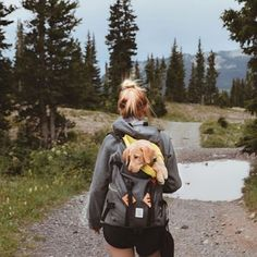 One of the best ways to help make sure your pet is not stressed by travel is to train them.