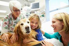 Cães são usados no tratamento de crianças em hospitais