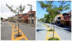 Águas de Pontal: Saiba como estão as árvores plantadas no asfalto e...