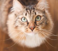 Why You Can't Outsmart Your Cat