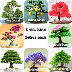 240 pz/borsa Premium Bonsai Pacchetto di 8 tipi di Bonsai Semi di Albero di Acero Pino Bonsai Semi Giardino Domestico di DIY Combinato Verde piante