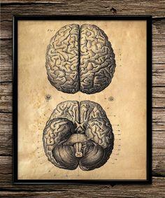 Vintage Brain Anatomy | Vintage Print | Anatomy Prints | Home Office Decor | Printable Wall Art | Vintage Wall Art | 8x10 | Instant Download