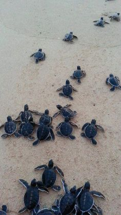 Animals 🙈 - Animals, animals wild, animals funny, animals cutest, animals and pets Cute Little Animals, Cute Funny Animals, Cute Baby Turtles, Turtle Baby, Turtle Love, Animal Wallpaper, Sea Turtle Wallpaper, Wallpaper Wallpapers, Tier Fotos