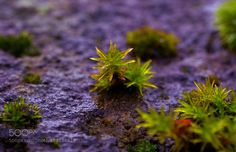 Life on the wall by sketchup2001 #nature #photooftheday #amazing #picoftheday