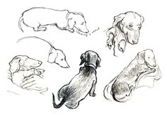 Sausage Dog Drawings: A small (very small) part of the research for my new book has involved drawing a miniature dachshund [Higgins]. Here are a few of those sketches, just to show how tricky this can be. As you can see, when he's not wriggling, chewing, or shouting, he's being quite ridiculous.