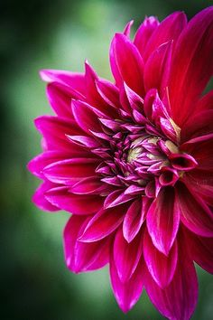 A Flower Blooms Flowers Garden Love