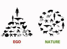 BASIC (Grades 11-12): Are humans really at the top of the food chain? Nature says otherwise
