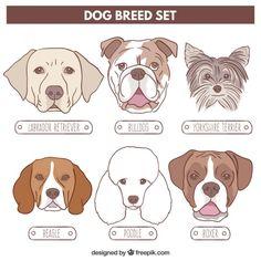 Conjunto raça do cão desenhado