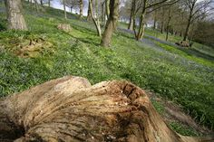 Woodland View emmetts kent uk