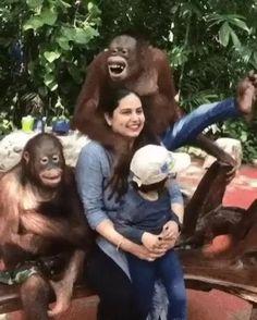 #monkey #funnymonkey #cuteanimals #funnyanimals #monkeyvideos #animalvideos Cute Little Animals, Cute Funny Animals, Cute Dogs, Funny Monkeys, Cute Animal Videos, Funny Animal Pictures, Unusual Animals, Animals Beautiful, Primates