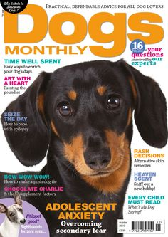 October issue of Dogs Monthly - out today! Books 2016, New Books, Animal Magazines, Heart Painting, All Dogs, Dog Days, Your Dog, Dog Lovers, October