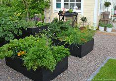 Cinnamon and cardamom: Questions Answered, Part 2 Garden Decor, Garden Boxes Diy, Edible Landscaping, Backyard Landscaping, Garden Trellis, Front Garden, Garden Architecture, Potager Garden, Gravel Garden