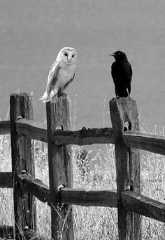 Conversation on the fence between two bird friends..