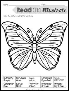 Butterfly Life Cycle Unit and Close Read And A Special Freebie!