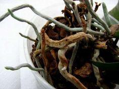 Rădăcinile aeriene ale orhideelor – Iată ce trebuie să faceți cu ele - Pentru Ea Compost, Roots, Gardening, Watering Plants, Irrigation, Vegetable Gardening, Lawn And Garden, Composters, Horticulture