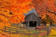 Pretty barn surrounded by gold