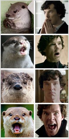 Otters who look like Benedict Cumberbatch - I don't know who this guy is, but that's funny!