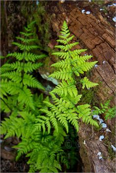 Ferns in the woods. Ferns in the woods.