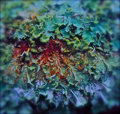 interesting  lichen?