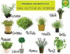Hierbas aromaticas y especias on pinterest salud for Cultivo de plantas aromaticas y especias