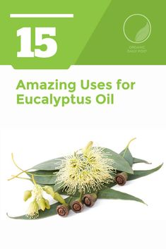 Eucalyptus oil has been used by the indigenous people of Australia for centuries to relieve everything from aches and pains to cold and flu symptoms. Herbal Cure, Herbal Remedies, Health Remedies, Flu Remedies, Eucalyptus Oil Uses, Oils For Sinus, Flu Symptoms, Feel Good Food, Eating Organic