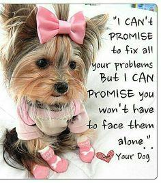 Cute Yorkie Promise