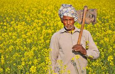 The Indian Farmer Photo [12000+ Views] by foxybagga, via Flickr