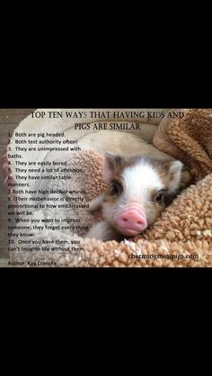 Love this from charming mini pigs!!