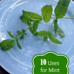 Did you plant mint this summer? Here are some unique ways to use it up!