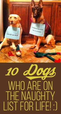 10 Dogs Who Are On The Naughty List For Life!
