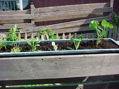 back deck garden Back Deck, Decks, Gardening, Plants, Front Porch, Lawn And Garden, Flora, Plant, Deck