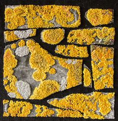 lichen on stone Simple Art, Unique Art, Organic Art, Weaving Textiles, Encaustic Art, Fabric Manipulation, Urban Art, Textures Patterns, Textile Art