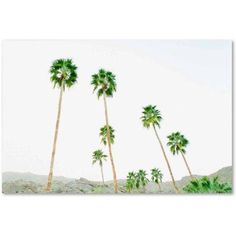 Trademark Fine Art 'Palms 3' Canvas Art by Ariane Moshayedi, Size: 16 x 24, Multicolor