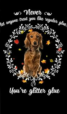 Dachshund Quotes, Dachshund Art, Glitter Glue, Old Dogs, Dachshunds, Christmas Pictures, Dog Breeds, Cute Dogs, Dog Cat