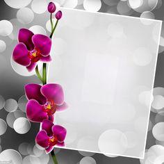 Framed Wallpaper, Flower Background Wallpaper, Frame Background, Flower Backgrounds, Paper Background, Background Images, Free Frames And Borders, Boarders And Frames, Borders For Paper