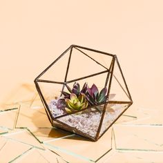 love this photo of my stained glass icosahedron terrarium! www.janelfoo.com
