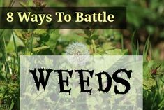 8 way to battle weeds and make gardening easier! Less time bent over pulling weeds means less soreness of the back and more time for fun stuff!