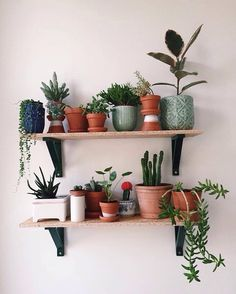Indoor Plant Decor ideas are fun for people of all ages. You don't have to have a huge garden or your Indoor Plant Decor Ideas are perfect for small garden arrangements. There are many different plants that are suitable for… Continue Reading → My New Room, My Room, Over Toilet, Decoration Plante, Flowers Decoration, Plant Shelves, Shelves With Plants, Decoration Bedroom, Wall Decor