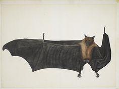 Photo Mug-Great Indian Fruit Bat, ca. Creator: Bhawani Das-Ceramic dishwasher safe mug made in the UK Fruit Bat, Indian Artist, Fine Art Prints, Canvas Prints, Art Plastique, A4 Poster, Heritage Image, Islamic Art, Metropolitan Museum