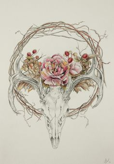 deer skull drawing - Google Search