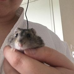 But first let me take a selfie! #aww #Cutehamsters #hamster #hamstersofpinterest #boopthesnoot #cuddle #fluffy #animals #aww #socute #derp #cute #bestfriend #itssofluffy #rodents