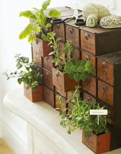 Drawer Herb Garden | How To Grow Your Herbs Indoor - Gardening Tips and Ideas by Pioneer Settler at http://pioneersettler.com/indoor-herb-garden-ideas/