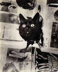 vintage photograph, 1930
