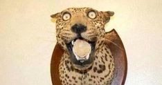 33 Taxidermy FAILs That Are Both Funny and Horrifying