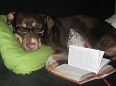 Bookish Pets: 1 of 5 finalists in the Best Bookish Pet Photo giveaway sponsored by Kitty Cornered and Algonquin Books.