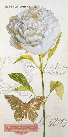 Printable image for decoupage and transfer purposes - Peony – Angela Staehling The Effective Pictures We Offer You About Decoupage botellas A quality picture can tell you many things. You can find the Decoupage Vintage, Decoupage Paper, Vintage Paper, Decoupage Dresser, Art Floral, Floral Prints, Art Prints, Botanical Flowers, Botanical Illustration