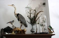 A small piece of my taxidermy collection.  Taxidermy, bee-eater, heron, woodpecker, glass dome, butterflies, humming bird, feathers, peacock, interior